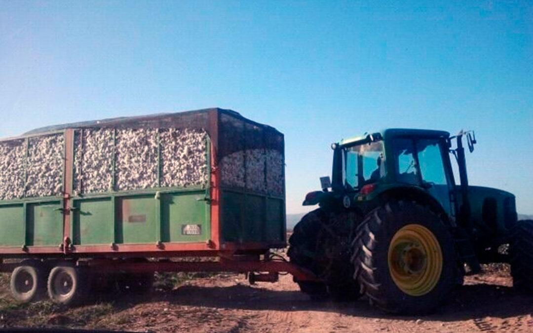 Reclaman una reducción del rendimiento para el pago específico y flexibilizar los requisitos de las ayudas del algodón por la sequía