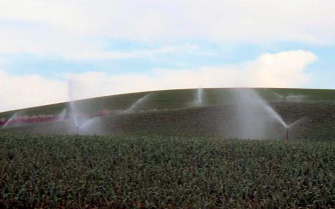 Satisfacción por el cambio de actitud de la CH Guadalquivir de aprobar una ampliación de la dotación de riego, como pedía el sector
