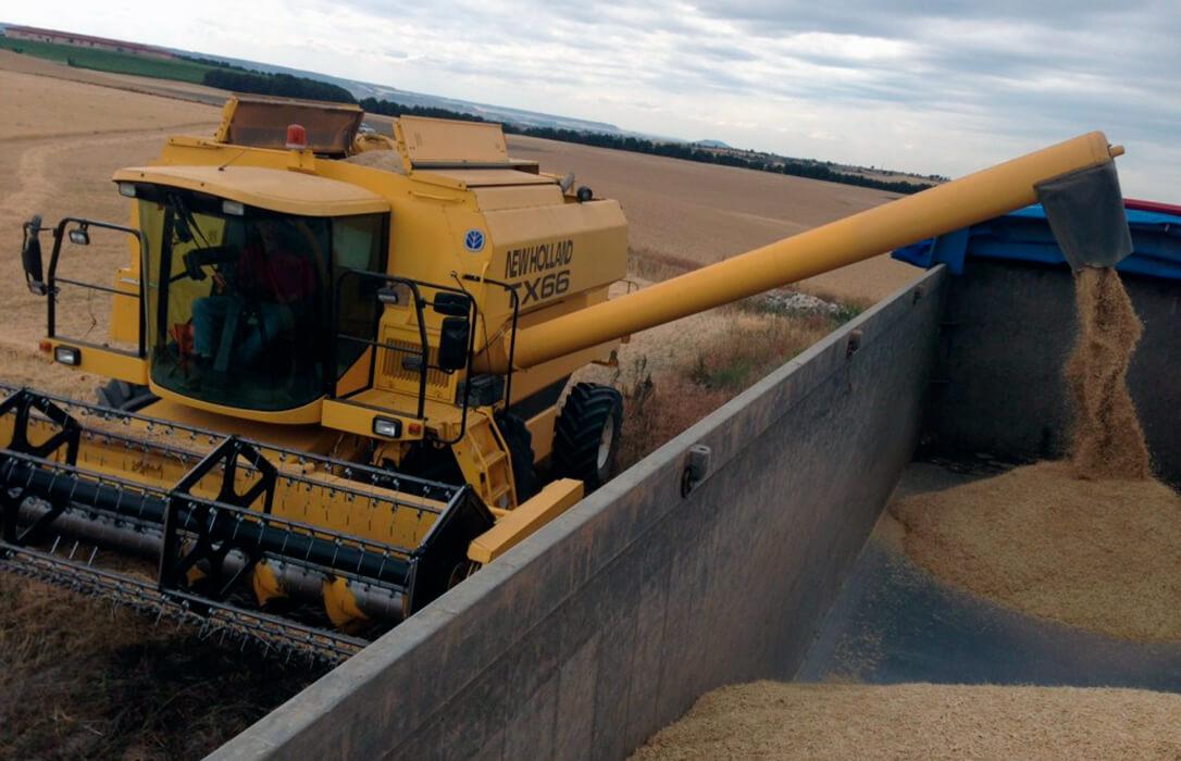 Asaja prevé una cosecha de cereales de invierno de 16 millones de toneladas, cinco menos que hace un año
