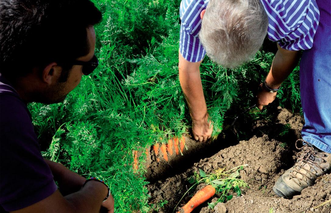 Propuesta para que las donaciones de explotaciones agrarias a los hijos menores de 40 años no tengan coste añadido en la renta
