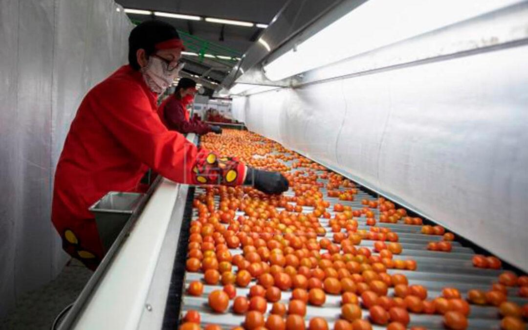 La Junta andaluza incoa 26 expedientes sancionadores por reetiquetado de productos agrícolas de origen marroquí
