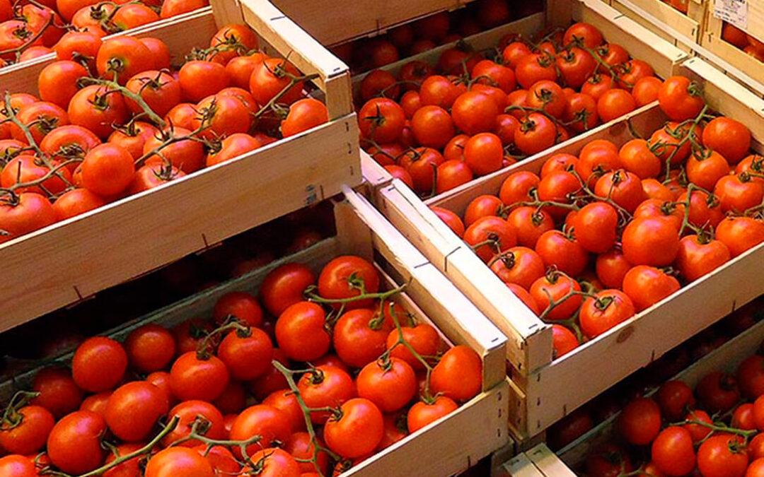 La competencia desleal de las producciones extracomunitarias, es especial marroquíes, deja en el tomate pérdidas de 25 millones