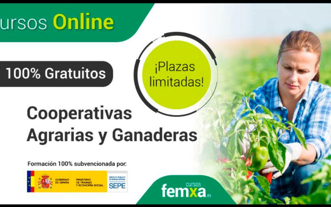 Cursos gratuitos del Ministerio de Trabajo y Economía Social para convertirte en un especialista de las cooperativas agrarias
