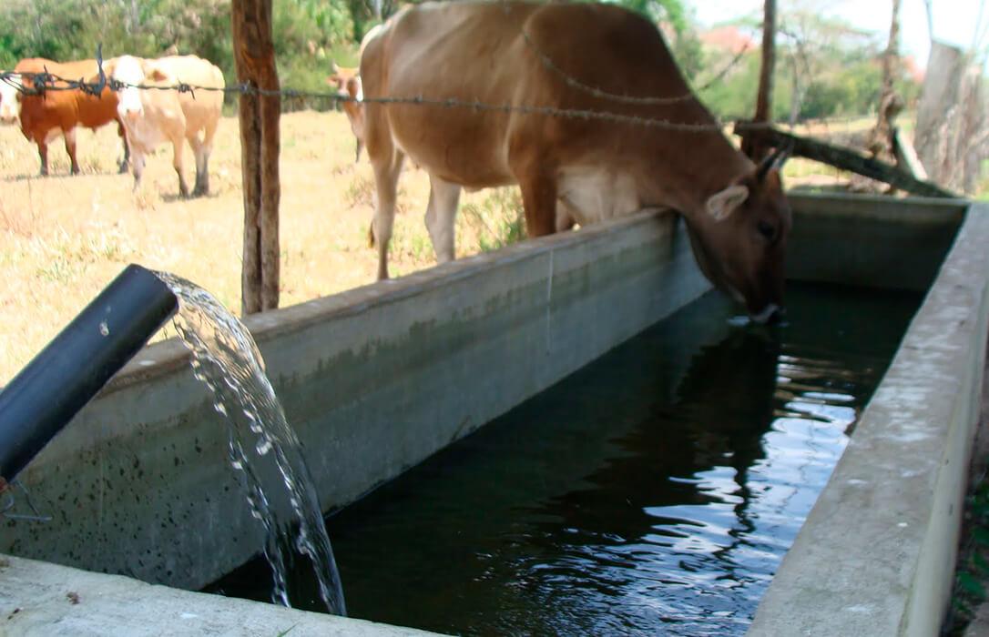 La Fundación Savia insta a dotar de infraestructuras y concesiones de agua para la ganadería extensiva ante la sequía hidrológica