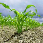La Agricultura de Conservación, una oportunidad para afrontar los retos presentes y futuros de la agricultura