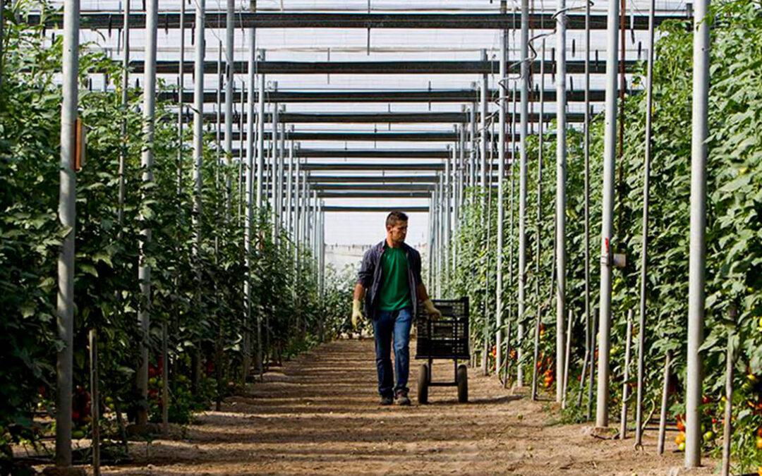 Los invernaderos miran con reservas el Plan de Recuperación europeo para el sector al no ajustarse a su realidad