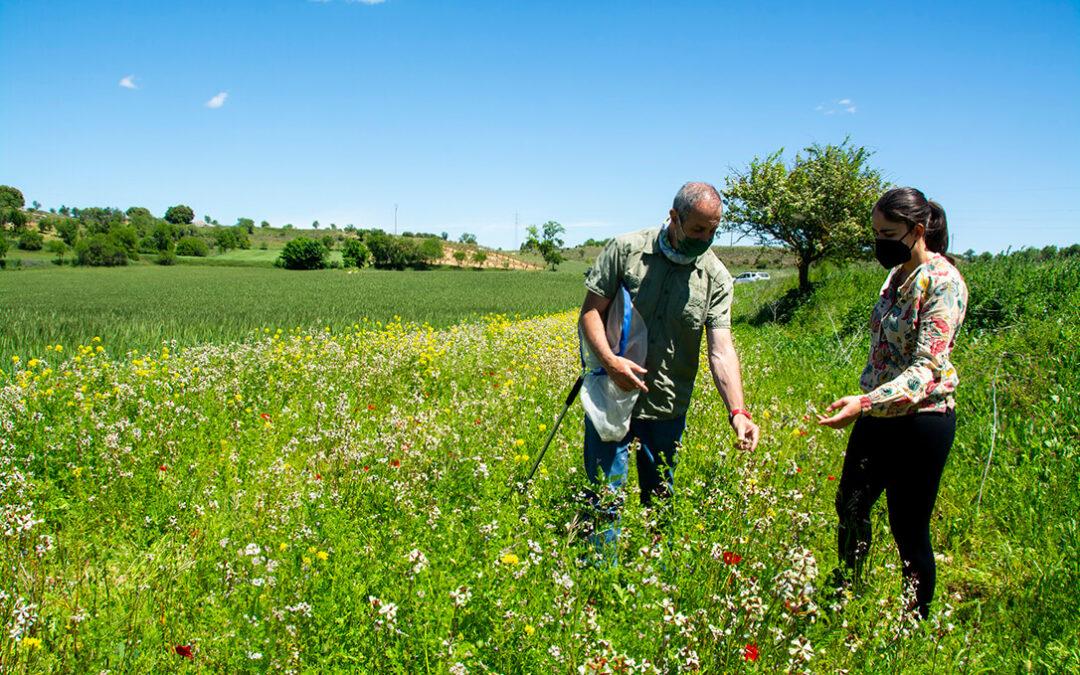 Márgenes para la Biodiversidad: Trabajo conjunto para afianzar una alianza entre agricultores e insectos polinizadores