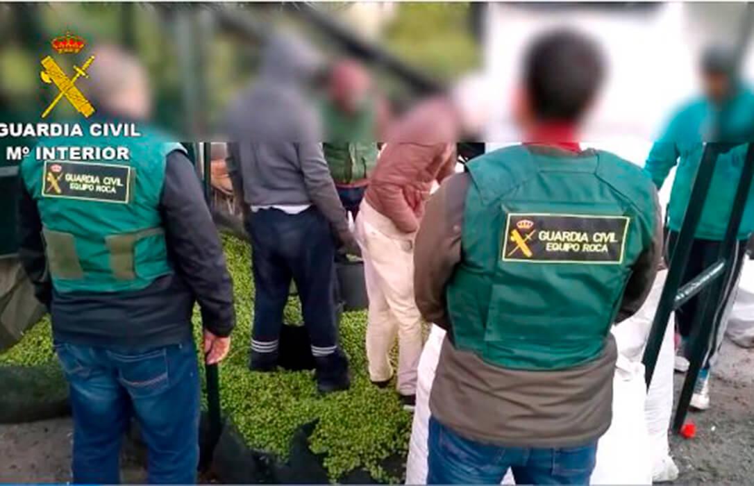 Interceptados con nueve toneladas de aceituna robada y documentación falsa una banda dedicada al hurto en el campo