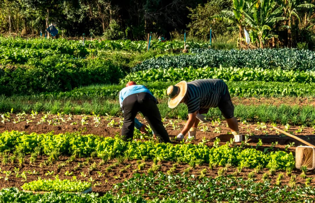 Debate de la PAC: No gusta el cambio de rumbo del Ministerio y piden garantizar una renta viable al agricultor profesional