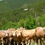 Destacan el esfuerzo del sector agrario en la lucha contra el cambio climático a través de la PAC