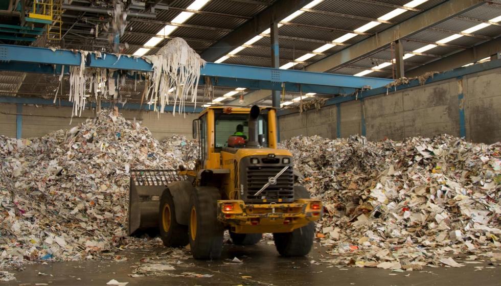 La madera empleada como materia prima por el sector papelero en España procede en un 97% de plantaciones locales
