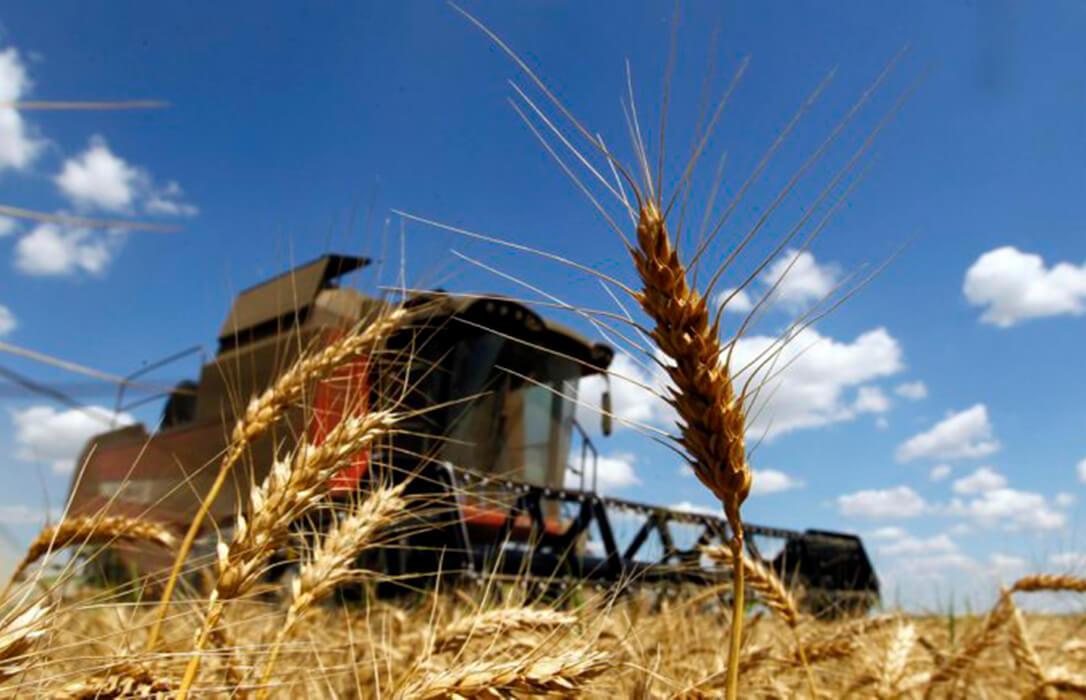 Los precios del trigo duro son los únicos que han dado buenas noticias mientras siguen bajando los cereales