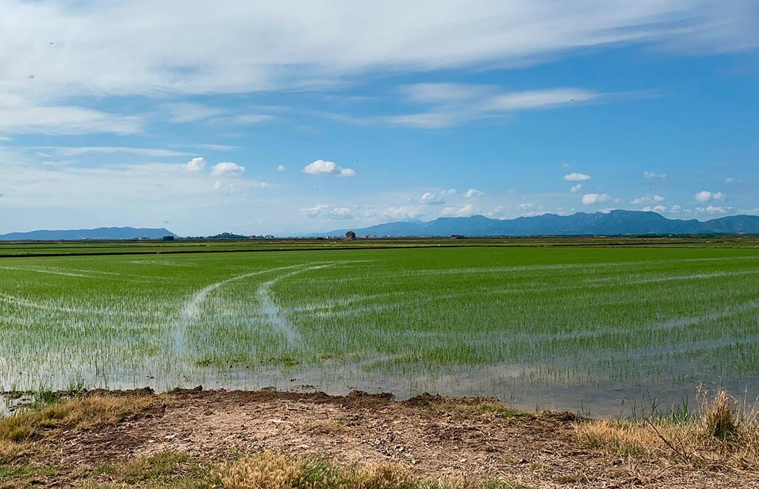 Denuncian la burla e insensibilidad del Ministerio al echar atrás la autorización excepcional del herbicida propanil en el arroz