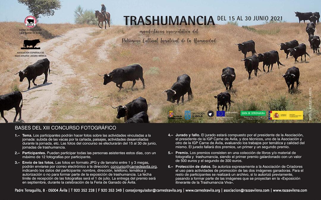 La Trashumancia de avileño, una cita anual con la vuelta a los pastos de la Sierra de Gredos