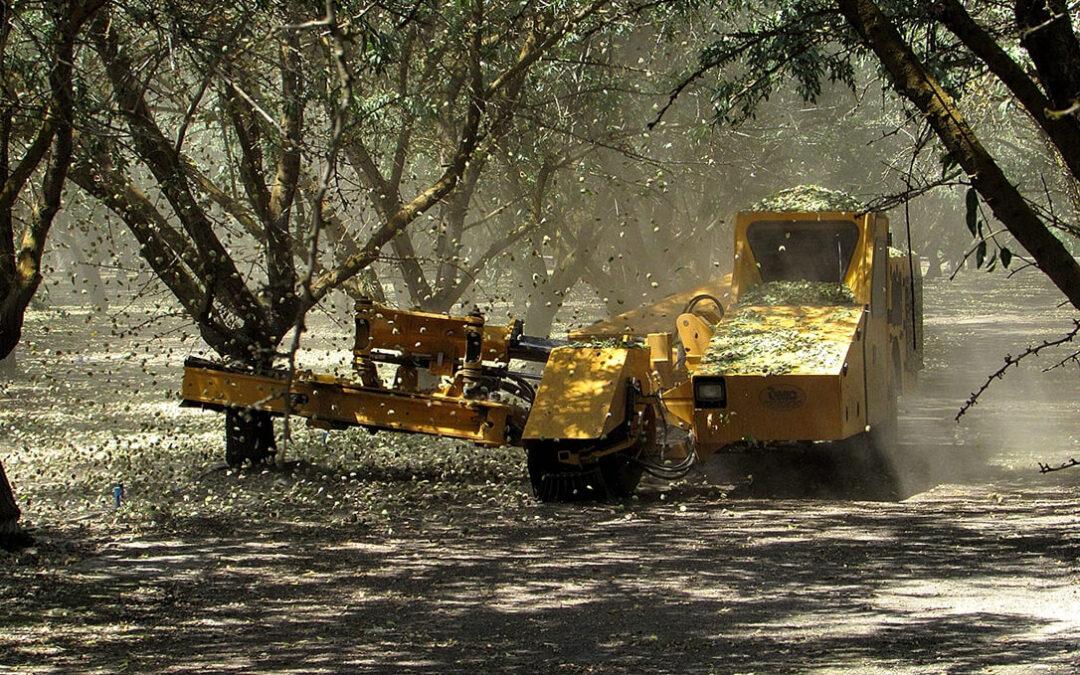 La sequía en Estados Unidos y la caída de la producción en España permite recuperar un poco la cotización de la almendra