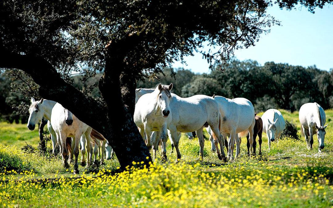 Comienza el pago de 3,4M€ en subvenciones a viticultores y ganaderos de equino afectados por la Covid-19