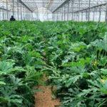 Proyecto de la Diputación para mejorar la competitividad de las explotaciones agrarias de la provincia de Cádiz