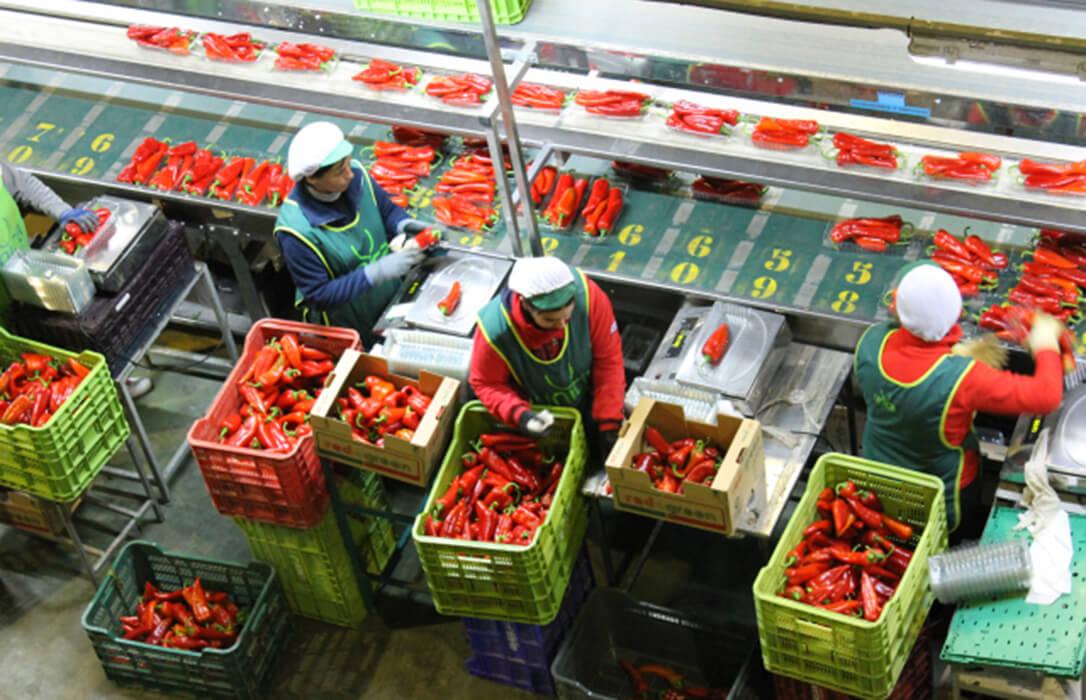 La campaña de primavera y los bajos precios en origen lastran el resultado final de la campaña hortofrutícola
