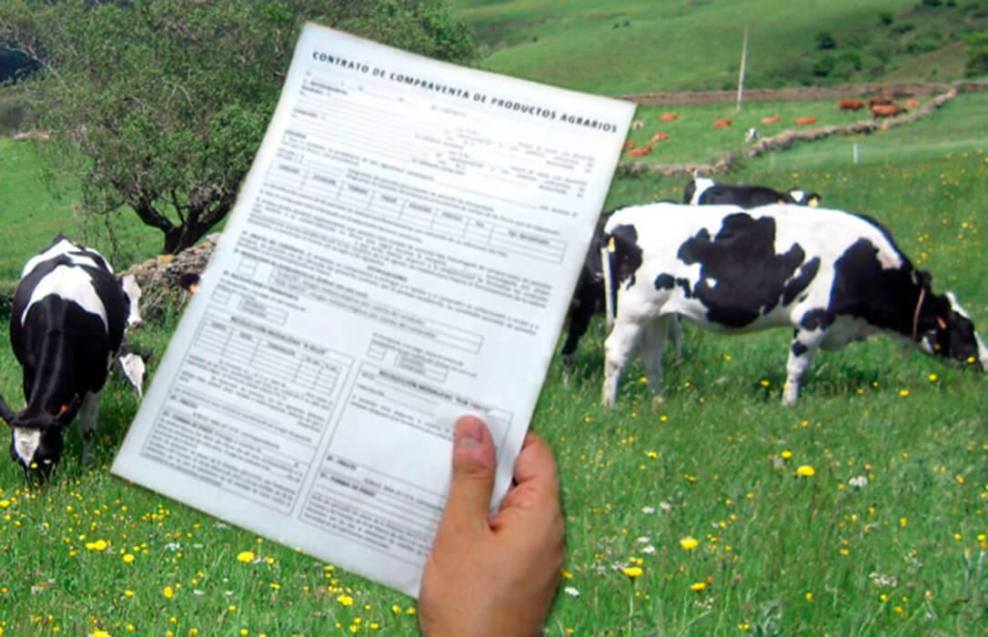 Exigen revisar todos los contratos de compra-venta de leche entre ganaderos e industria para ajustarlos a los costes reales