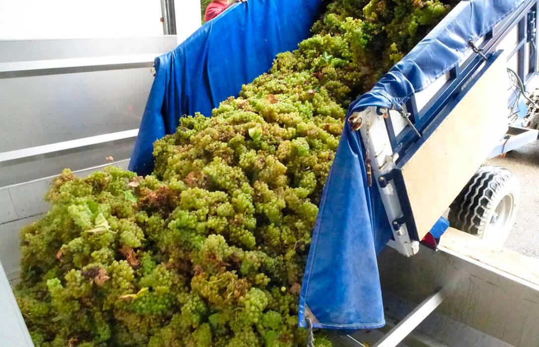 El Gobierno apuesta por crear contratos plurianuales para compra de uva y vino para dar «estabilidad» a los operadores
