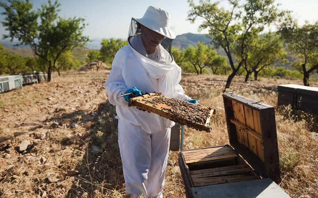 La UE empieza a moverse tras dos décadas de parálisis para frenar el colapso de las colmenas y el declive de las abejas