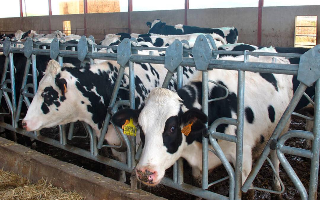 El sector lácteo no aguanta más: Exigen un acuerdo producción-industria-distribución para hacer frente a la grave crisis