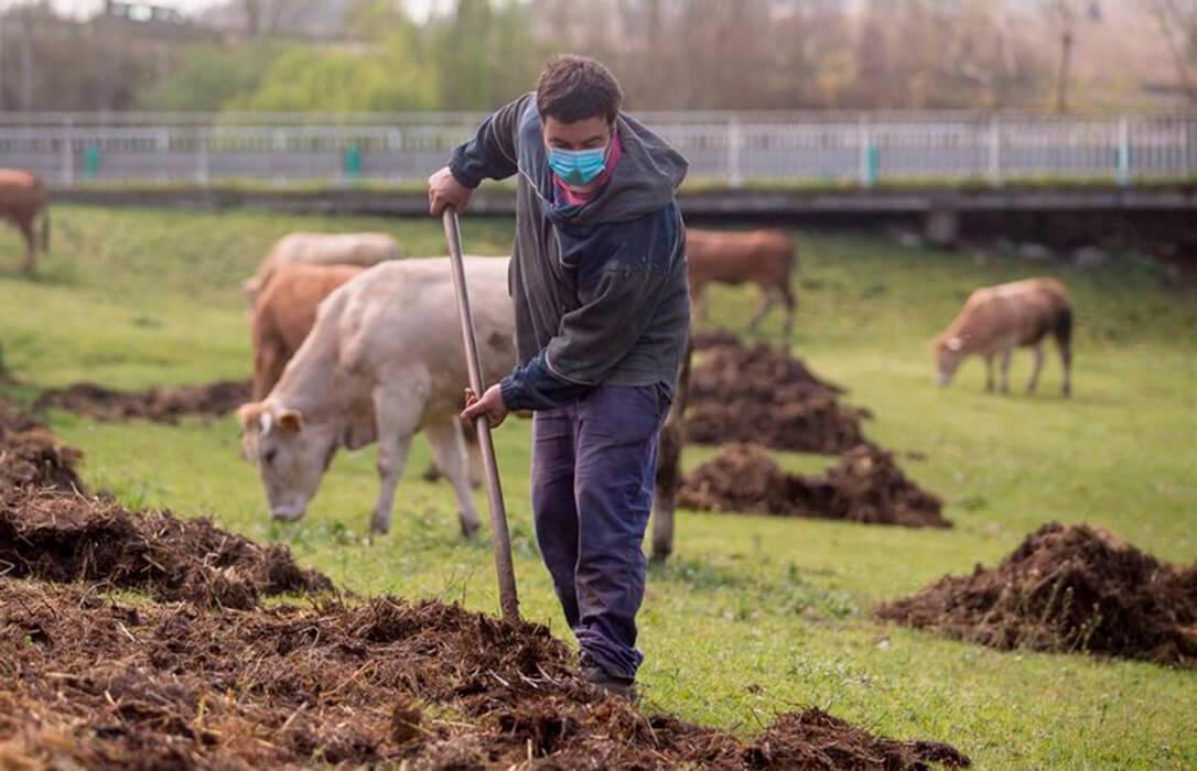 La explotación agraria media en España tiene 46,9 hectáreas, el 41% arrendadas, y cuenta con 36 unidades ganaderas