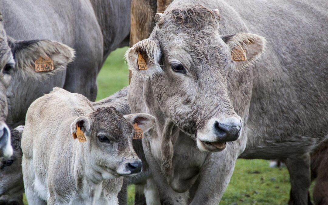 Más reacciones de indignación y enfado en el sector ganadero ante la campaña de Garzón contra la carne que piden retirar