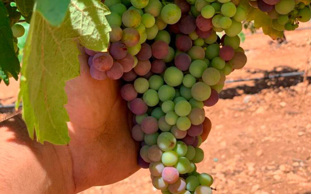 Piden tranquilidad y normalidad a los viticultores tras la desaparición de la Interprofesional DO Valdepeñas