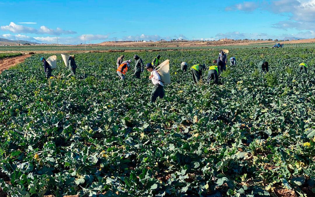 Acusan a Trabajo de «amenazar» con inspecciones y sanciones de hasta 800.000€ si no se controlan los golpes de calor en el campo