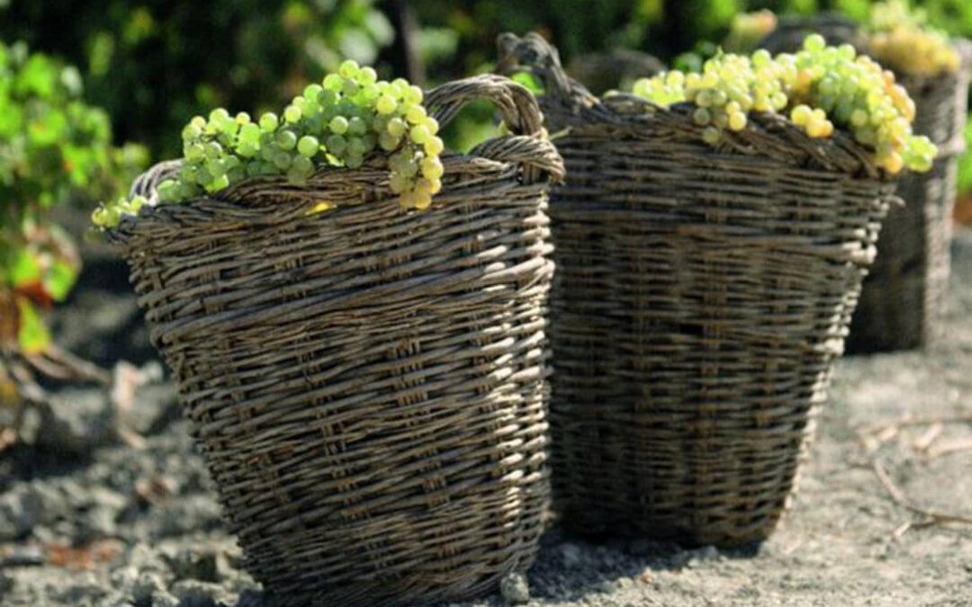 Los viticultores avisan: «El Marco de Jerez se muere si no se recuperan los precios de la uva y se valora su calidad»