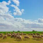 Plantean crear un observatorio de la sequía que contraste de forma objetiva el seguro de compensación de pastos