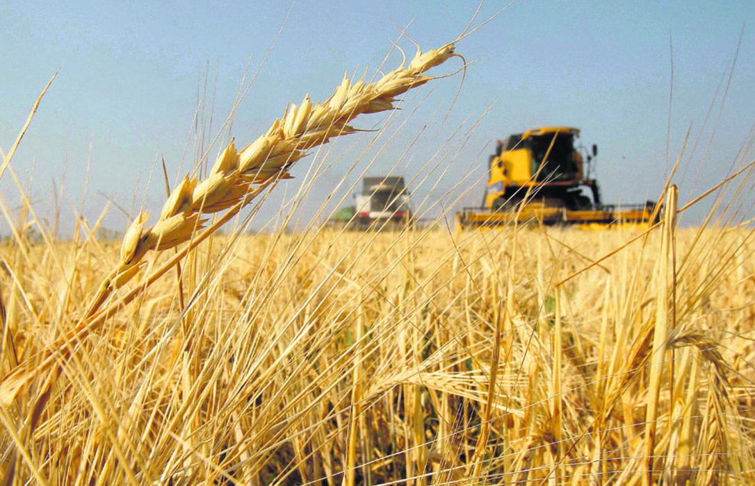 Los nervios llegan a los mercados cerealistas y provocan una subida de forma generalizada con el trigo duro subiendo 29€