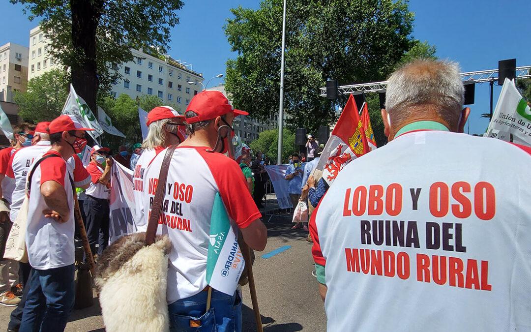 Teresa Ribera se convierte en una 'ministra a la fuga' y no acudirá a Zamora para evitar la protesta ganadera por el lobo