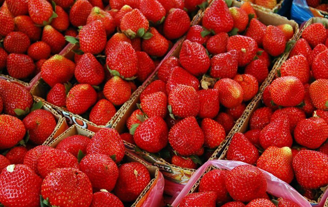 Las fresas van recuperándose y llegan al nivel de producción y venta precovid