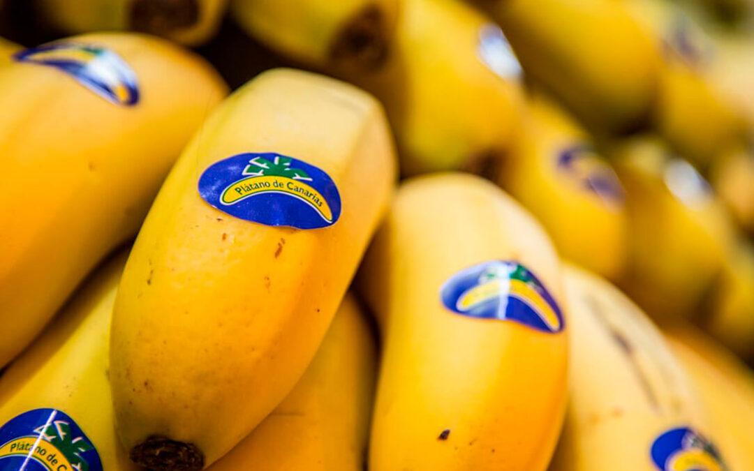 Plátano de Canarias: Planas cree que se debería incluir en la Ley de la Cadena Alimentaria, pero escuchará todas las partes