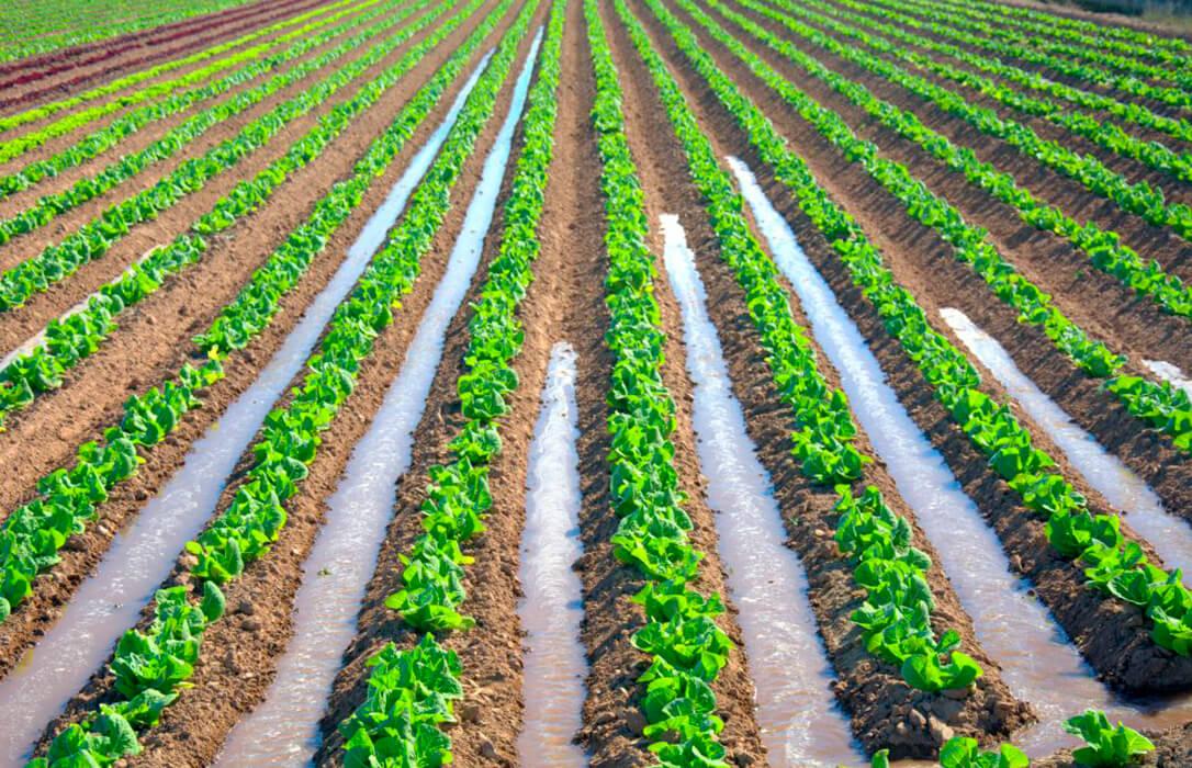 Acusan al Gobierno de Pedro Sánchez de buscar «la destrucción» del sector agroalimentario murciano con sus políticas
