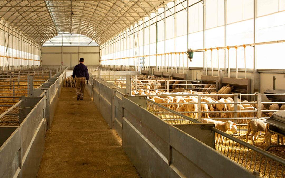 CorSevilla ya es la primera cooperativa que obtiene el primer sello de Bienestar Animal Interovic España (BAIE)