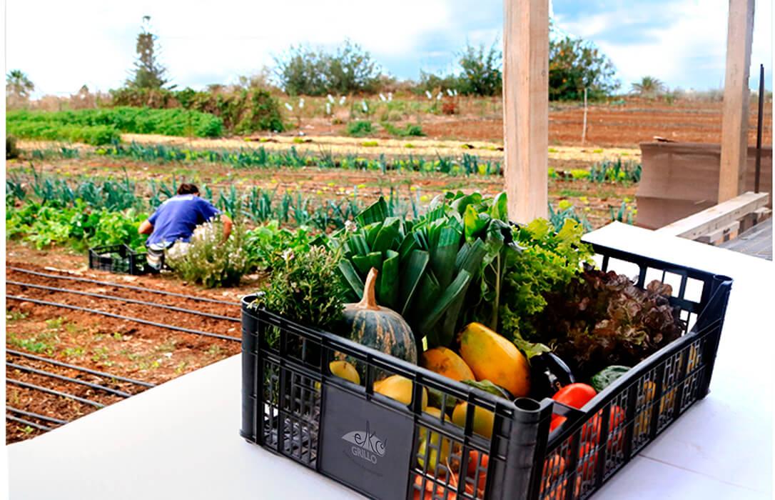 Una propuesta a seguir: El Cabildo de Tenerife comprará los excedentes alimenticios del sector primario