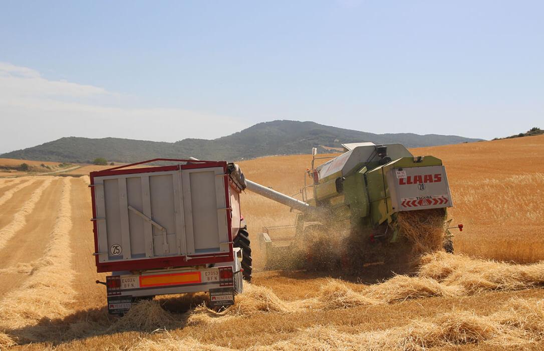 La campaña cerealista en Navarra se cierra con un buen balance en términos generales al superar lo inicialmente previsto