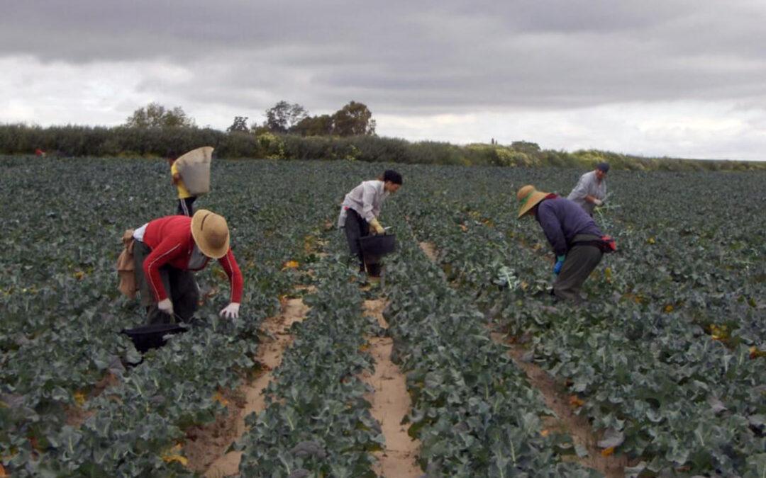 Jóvenes cooperativistas del sector agrario andaluz llaman a liderar el relevo generacional mostrando sus propias experiencias