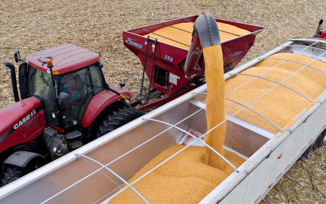 ¿Cambio de tendencia?: Algunos cereales bajan su cotización por primera vez muchas semanas mientras el trigo duro sube 20€