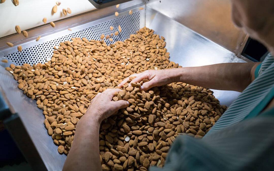 La sequía dispara los precios de la almendra en California y provoca una subida de las cotizaciones de la almendra española