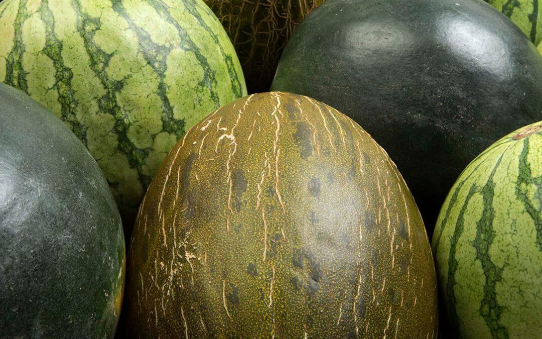 El clima adverso en Europa reduce el consumo y trunca una campaña de melón y sandía en Murcia que se presumía positiva