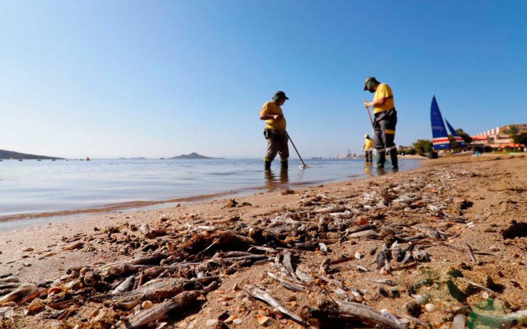 Peces muertos en el Mar Menor: Rechazo a quienes culpabilizan a la agricultura de ser los responsables de la contaminación