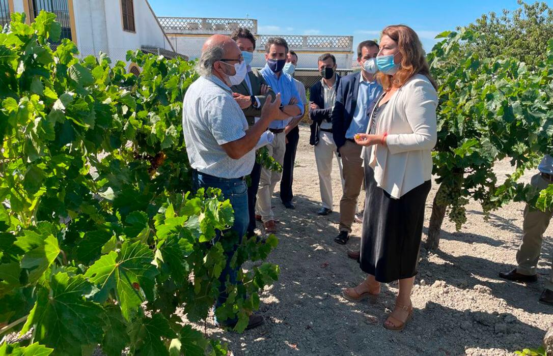 Regiones de la PAC: Andalucía incrementa su presión para que las regiones agroecológicas coincidan con la productivas