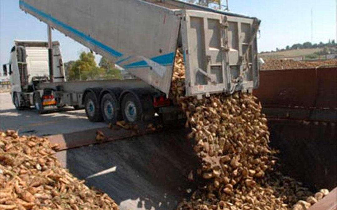 Azucarera cierra la campaña en Andalucía tras 72 días de duración con 456.181 toneladas de remolacha líquida