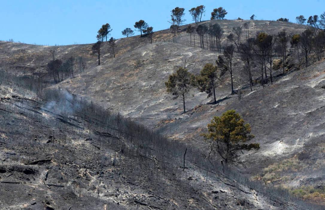 ENTREVISTA: Jordi Vendrell (Fundación Pau Costa): «Repoblar la España Vaciada reduciría los grandes fuegos forestales»