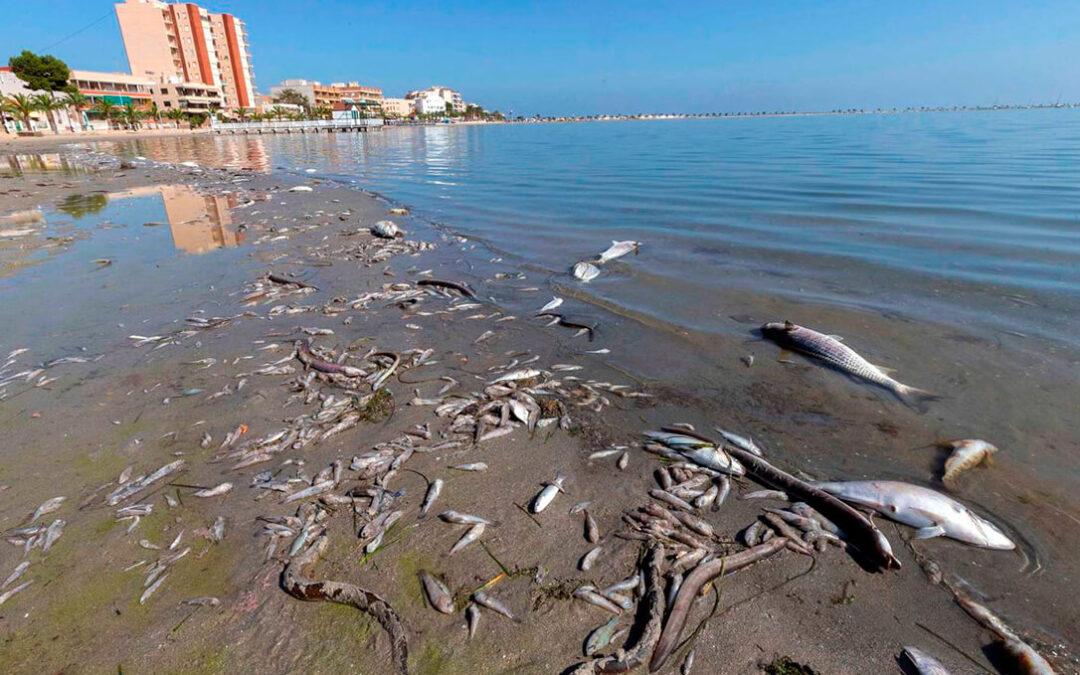 Todo es política: Los vertidos en el Mar Menor acaba en una discusión por el problema del trasvase Tajo-Segura