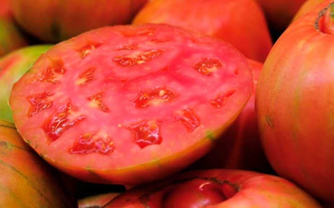 La crisis de las hortalizas por las importaciones arrastran al tomate valenciano, que pierde el 50% de su precio en solo un año